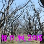 พยากรณ์ของการบานซากุระ(3-2558)